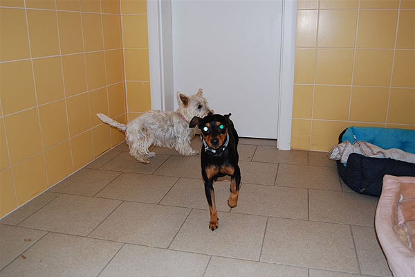 hundepension20.jpg